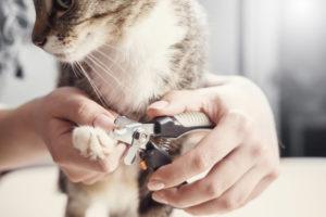 Cat Nail Trimming, Pet nail trimming